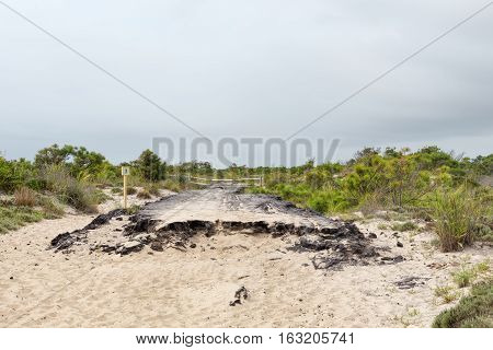 Remains of an old asphalt road along one of the sand dune trails on the northern Maryland end of Assateague Island.
