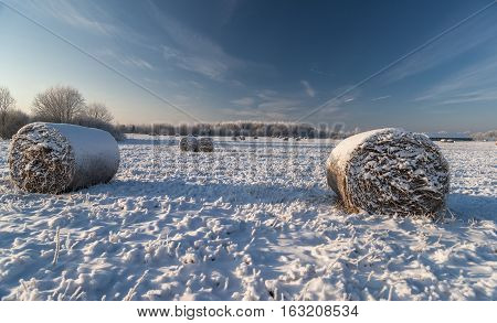 Snow covered field with rolls of hay and hoar frosted trees in cold winter day