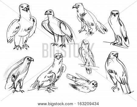 Golden eagle. Buzzard. Legged Buzzard. Kestrel. Hawk. Set. Hand-drawn