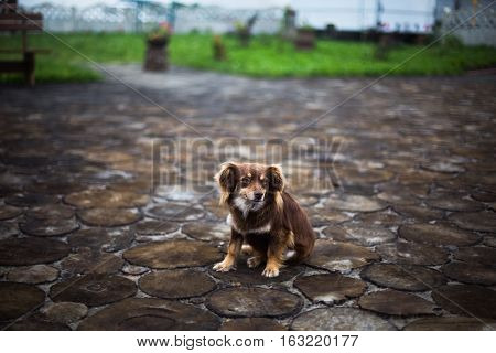 little fluffy dog with orange brown and white fur the dog is sitting on a tree stump