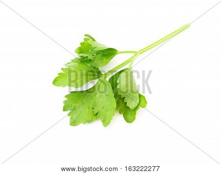 Celery leaf on white background , 21/5000 Used for cooking