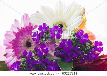 Beautiful colorful flower, chrysanthemum on white background.