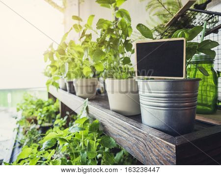 Blank Name plate sign on Herb Pot Plants Home garden