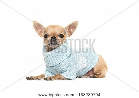 Cute chihuahua puppy lying on the floor seen from the side and facing the camera wearing a blue knitted sweater isolated on a white background