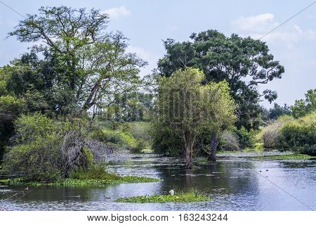 Thabbowa sanctuary in Puttalam, Sri Lanka nature reserve