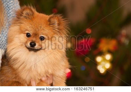 The wonderful story about small happy puppy under the Cristmas