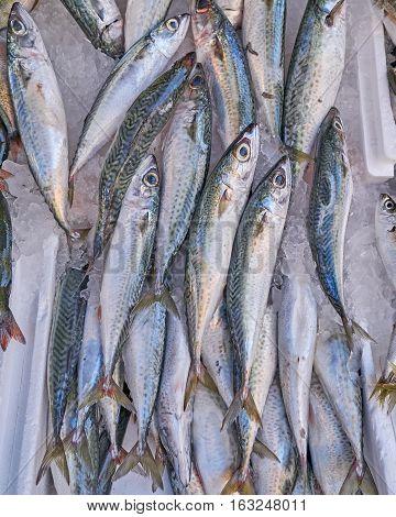 fresh horse mackerel fish at the local market