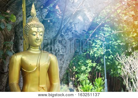 Buddha statue with sunlight and nature tree background