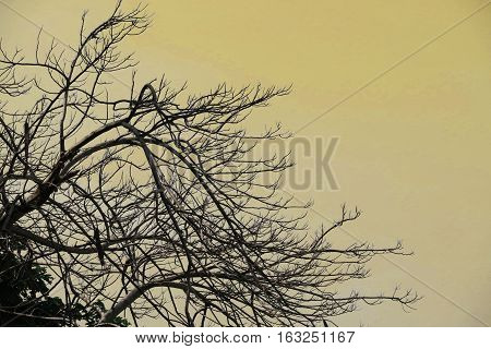 Silhouette of tree branches yellow background. Silhouette nature branches tree background