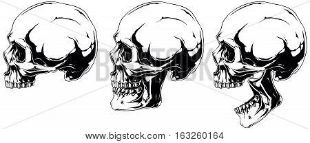 A vector illustration of White scary graphic human skull in profile projection set