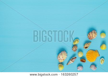 set of shells in the corner on a blue background