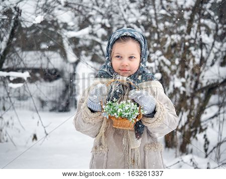 Little girl in winter in a snowy forest with a basket of snowdrops. Fresh flowers in winter