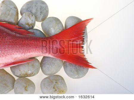 Red Rock Fish