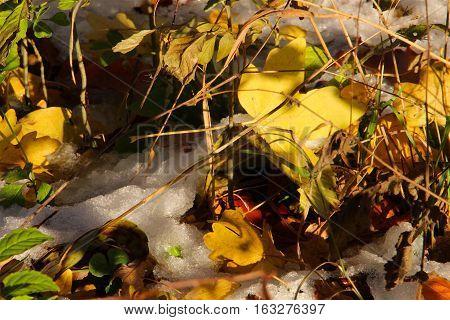 Summery nice colors in November so beautiful