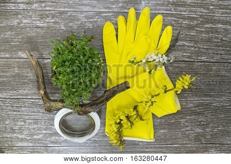 Set of gardener things: green blossoming Aubretia in the jar, yellow gloves and colorful flowers. Spring cleaning. Top view