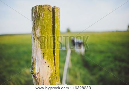Wooden Fence On A Green Meadow