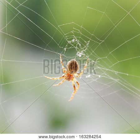 Spider on cobweb in window - macro view