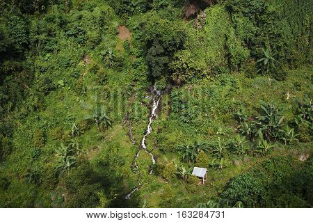 Green trees background on mountainside on sanny day