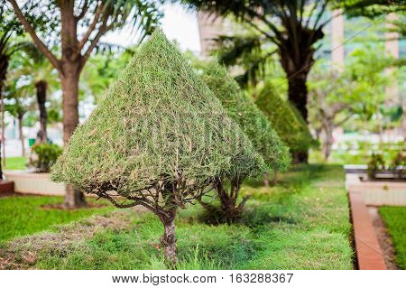 Vietnamese Trees In The Park. Vietnam