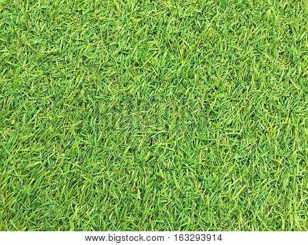 Green grass texture background, artificial grass grass