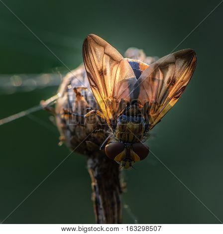 The sun beautiful illuminates wings of sleeping fly