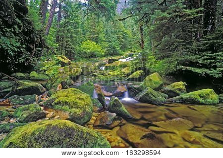 Creek in Northern temperate Rain forest Princess Royal Island West-coast British Columbia