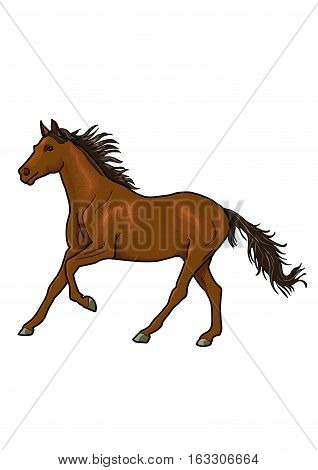 Running graceful brown horse with the black mane and black tail on a white background.