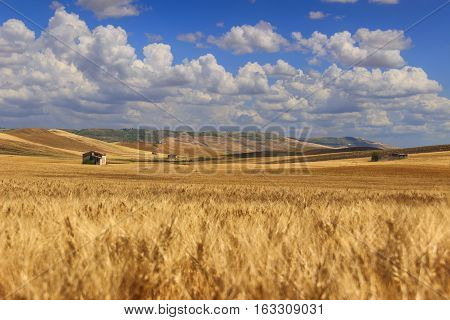 RURAL LANDSCAPE SUMMER.Between Apulia and Basilicata: countryside with cornfield dominated by a clouds.ITALY. Hilly countryside: in the background abandoned farmhouses and bales of hay.