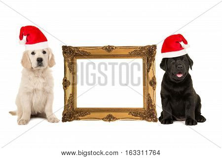 Golden victorian picture frame isolated on a white background with one golden retriever puppy and one black labrador puppy on the side with room for text inside the frame both dogs wearing a christmas hat