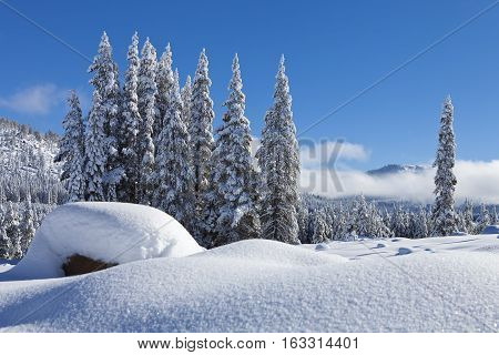 Snow Covered Winter Wonderland with trees and blue sky