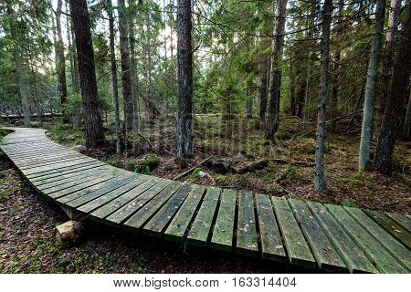Old Wooden Boardwalk Covered With Leaves In Ancient Forest