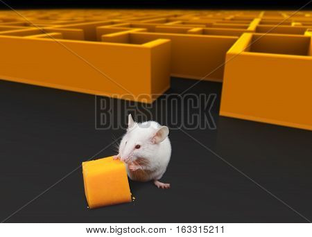 White mouse at exit of maze with Cheese.
