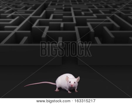 White mouse at maze exit over dark background
