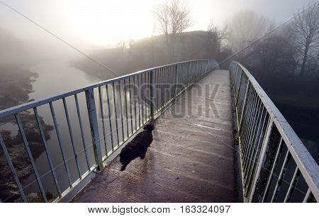 Bridge Dog