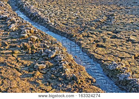 Small Water Stream On Dried Cracked Earth