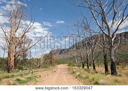 Landscape with burnt trees in the south of Marakele National Park, South Africa