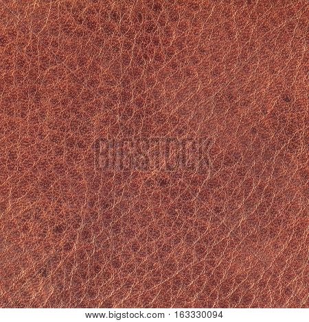 Red brown leather texture background for design with copy space for text or image.