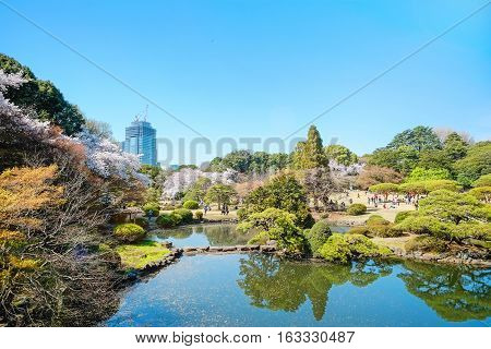 Beautiful scenery with red leaf green willow blossom sakura clear pond and bright vivid blue sky in spring cherry blossom season Shinjuku Gyoen Park Tokyo Japan