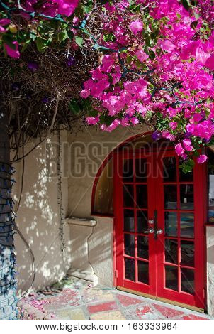 Huge Bougainvillea  Plant Framing Entry To A Building