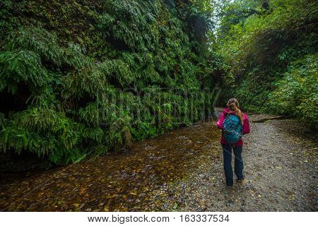 Backpacker Exploring Fern Canyon California