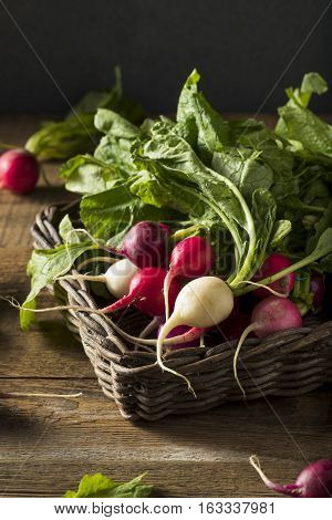 Raw Organic Muli Colored Easter Radishes