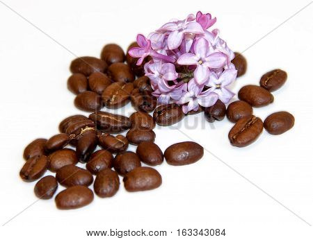 Natural Cosmetics Concept Green Branch Of Lilac And  Roasted Coffee Beans