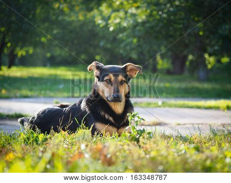 stray dog in the Park. Summer Sunny day grass