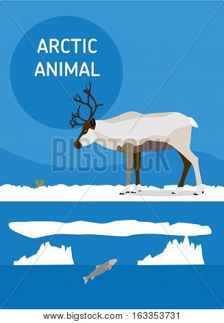 Reindeer looking for food in the tundra. Vector drawing of a series of Arctic animals. Flat style illustration