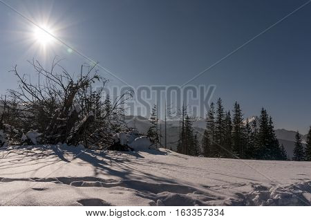 Sunny winter landscape on mountain glade .