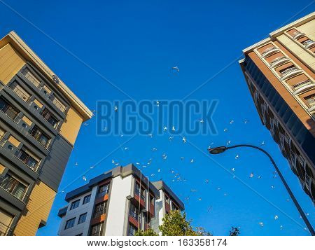Flock of seagulls hovering in the blue sky