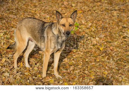 Outdoor portrait of cute stray female dog