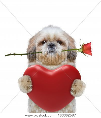 Cute dog holding heart and rose -- isolated on white