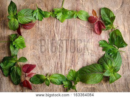 Frame From Fresh Salad Leaves