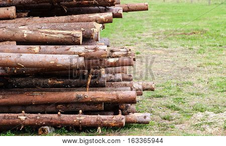 A pile of logs closeup with copyspace on the right